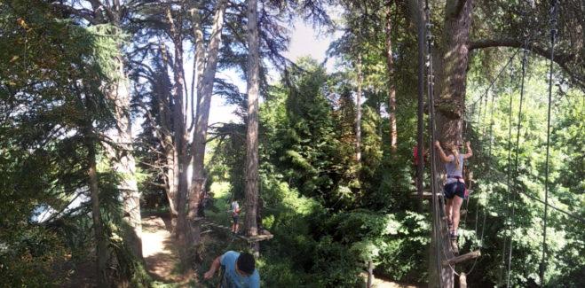 voyager au cœur des grands arbres