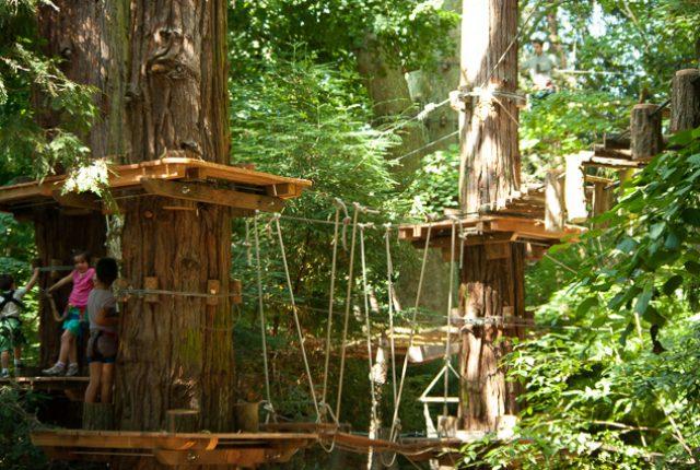 2013.juil_._Art-en-arbres_001
