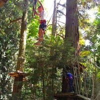 sequoia-peter-pan